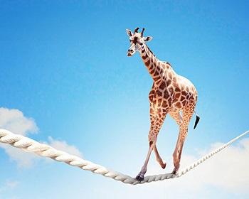 Au sommet de l' audace vos pas sont équilibre sur le fil de votre vie.